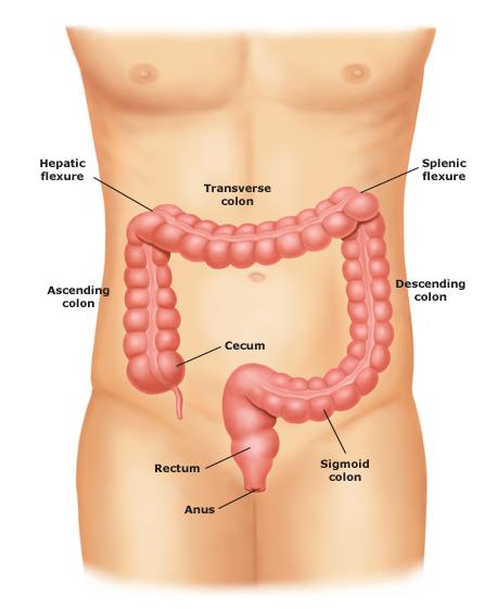 detoxifiere sigură a colonului