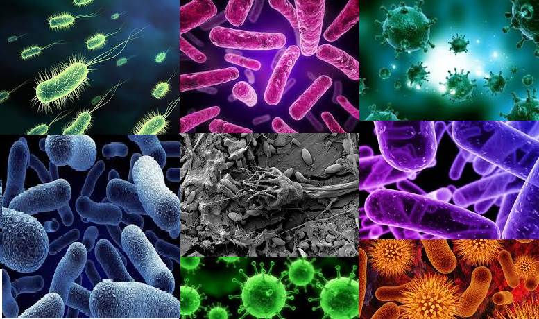 bacterii parazite