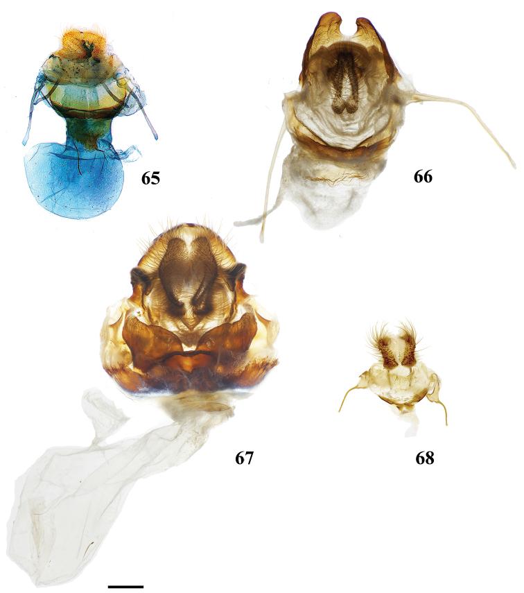 parazitii cu margineanu