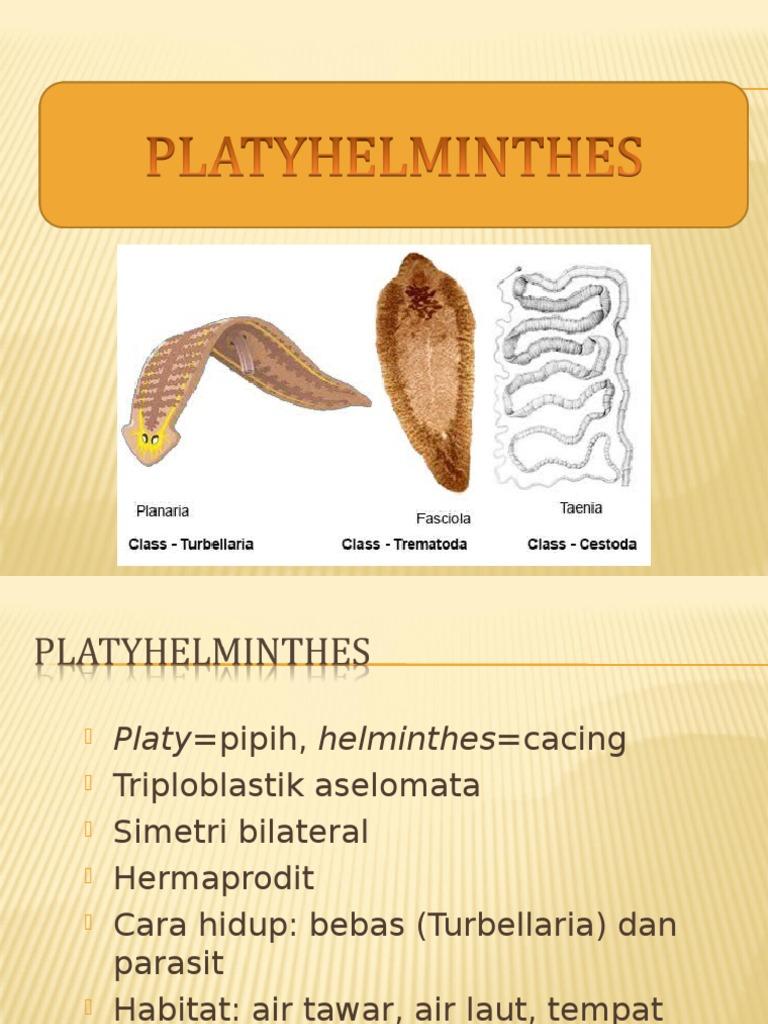platyhelminthes completă sistemul digestiv
