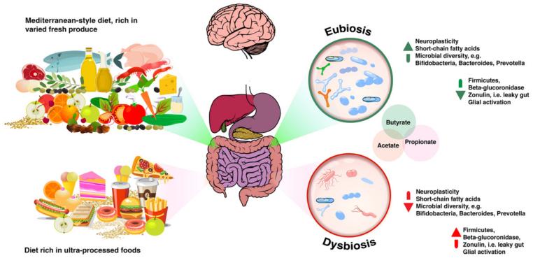 dysbiosis of the gut apariția de viermi