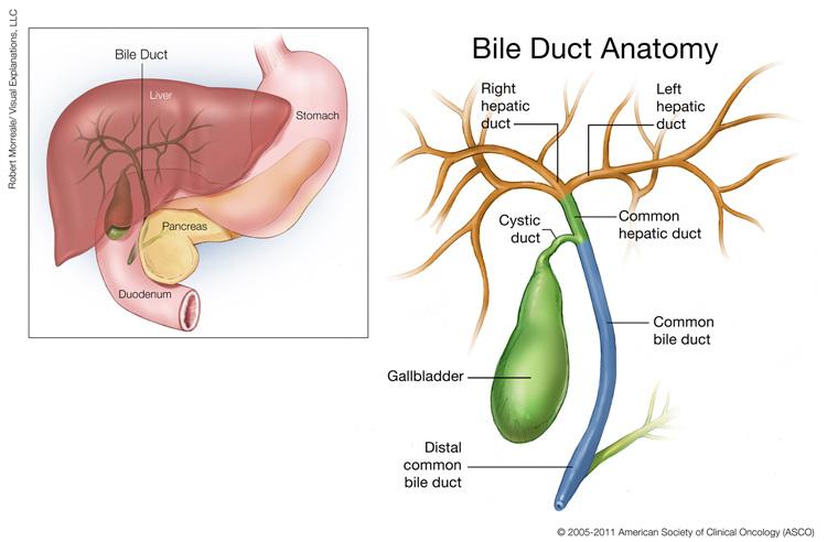 cancer of hepatic duct hpv na lingua e transmissivel