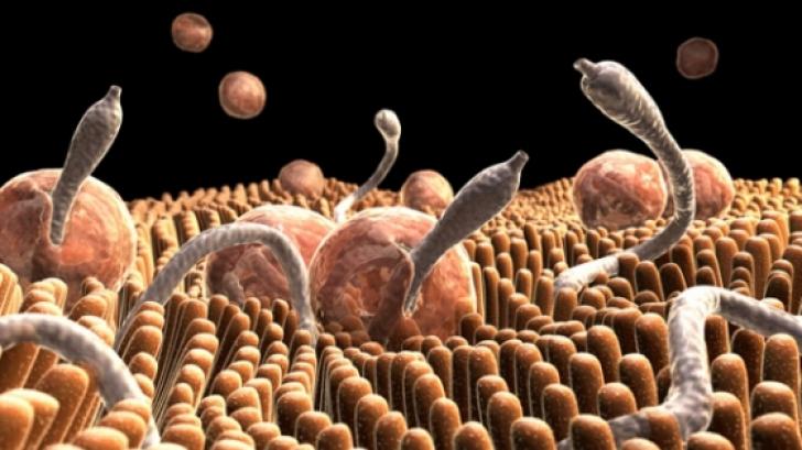 simptome ale prezenței parazitare