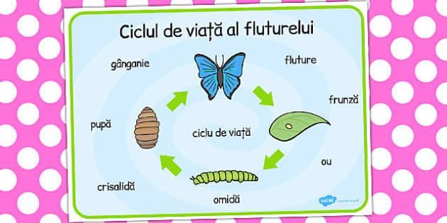 ciclul de viață al fluturilor și lanțurilor detoxifiere sigură a colonului