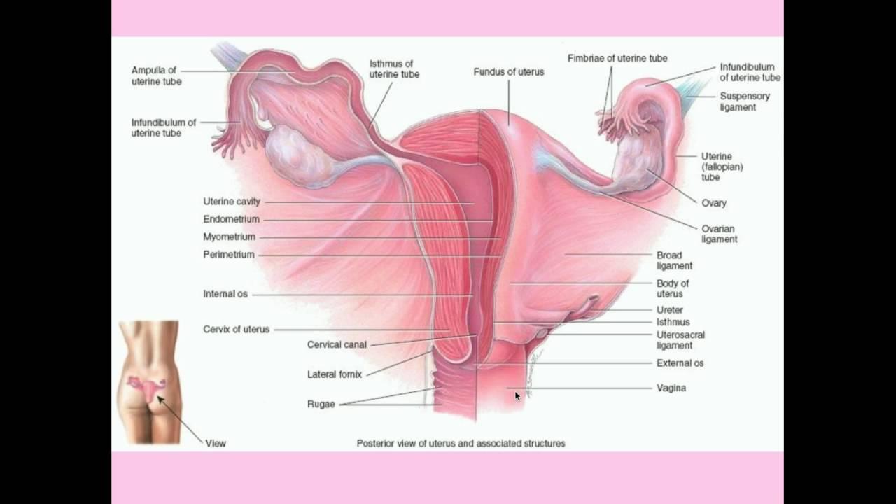 cancer laringo faringian