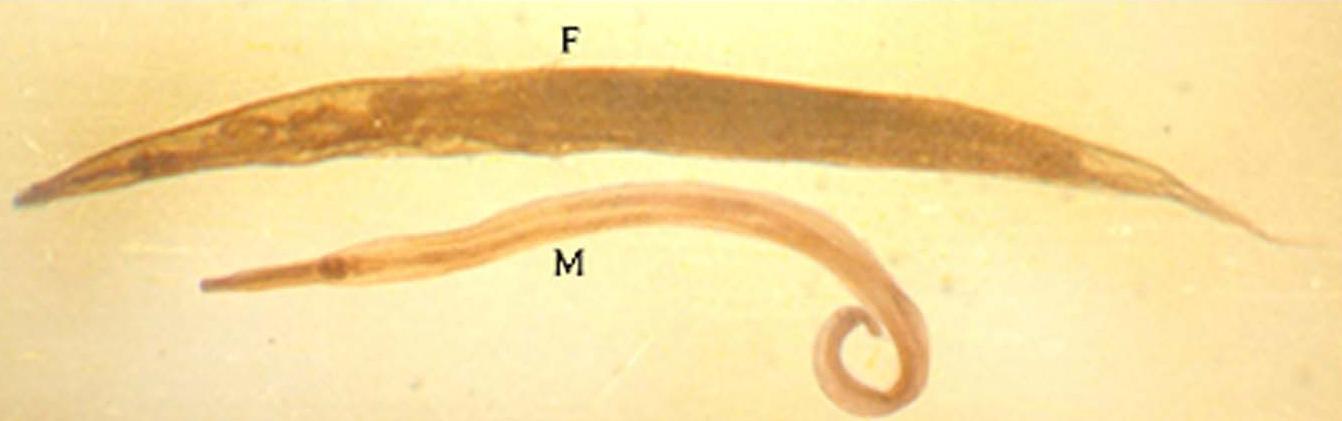 papilloma virusi nima condiloame cum să eliminați mâncărimea