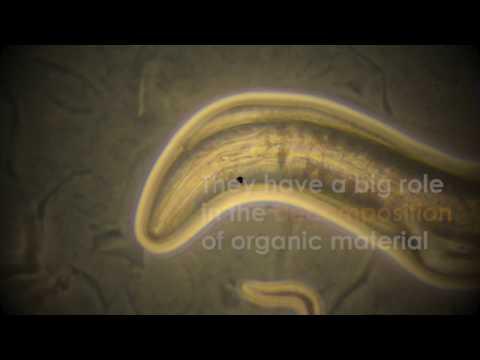 medicament pentru viermi pe viermi roți warts on hands and feet