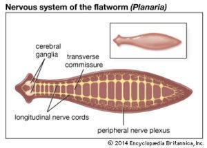 tratament de viermi de 3 ani copil paraziti u crevima ljudi