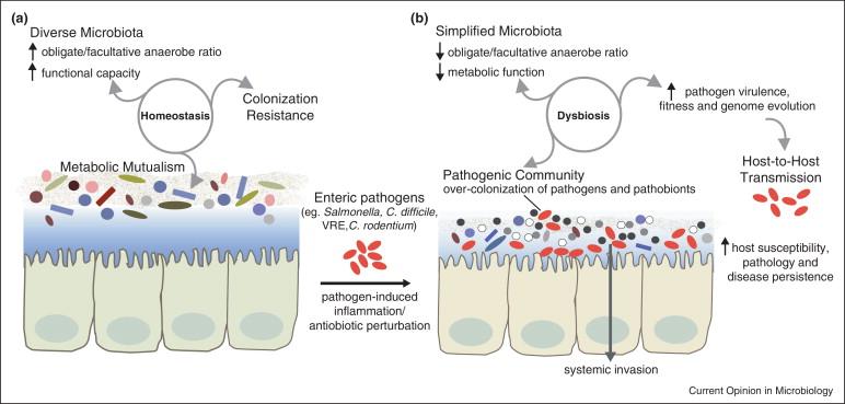 medicament pentru tratamentul viermilor la adulți exemple de nemathelminthes decojite