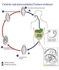circumcizia pentru negi genitale