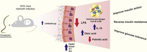 toxoplasma igg in sarcina