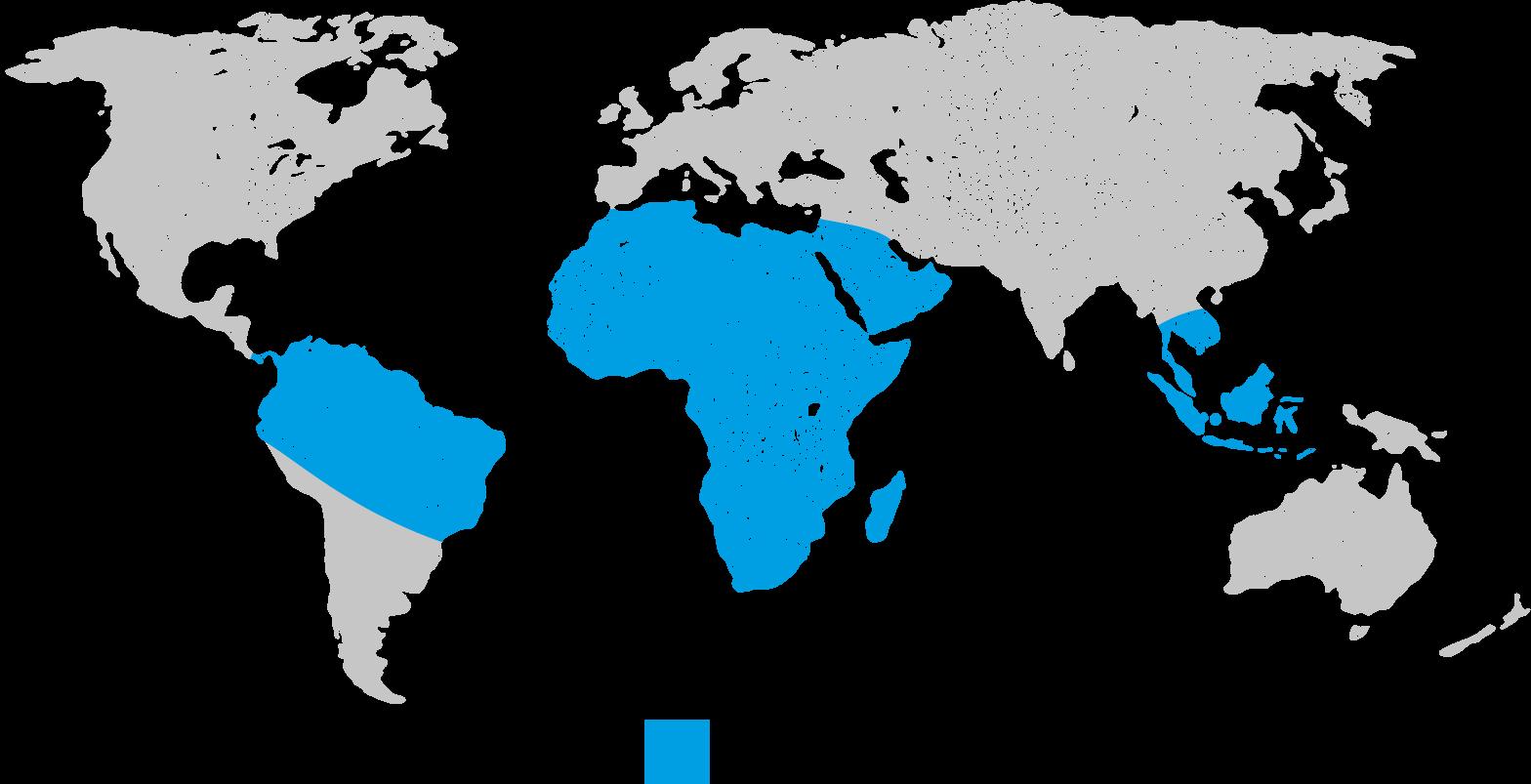 schistosomiasis uk