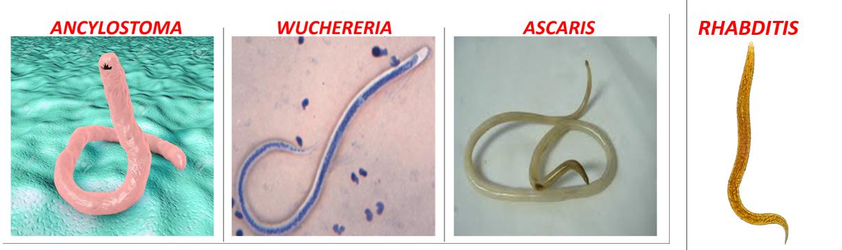 nematod aschelminthes papilomatosis vestibular tratamiento