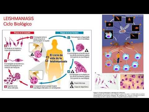 Moduri de infectare cu tenioză