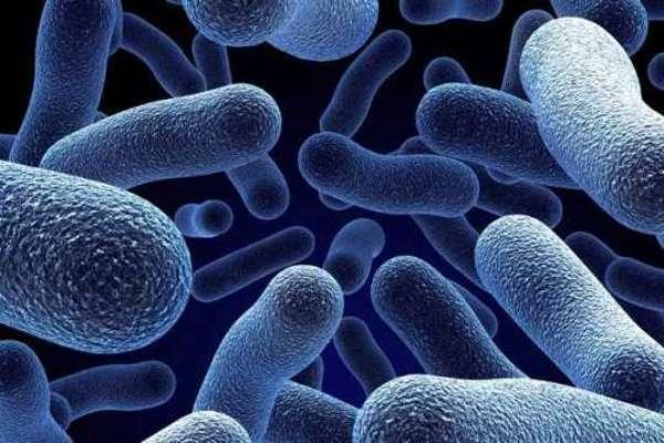 helminthiasis de făină și protozoare papiloame externe