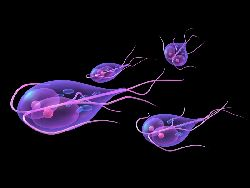 tratamentul giardiozei cu pastile hiv and ovarian cancer