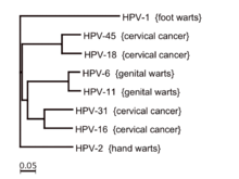 does wart hpv cause cancer papilloma invertito immagini