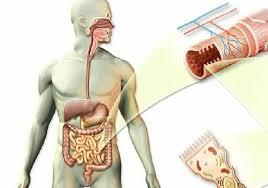 kako otkriti paraziti u organizmu hpv negli uomini