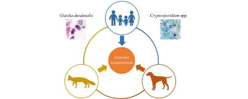 giardia și criptosporidiul
