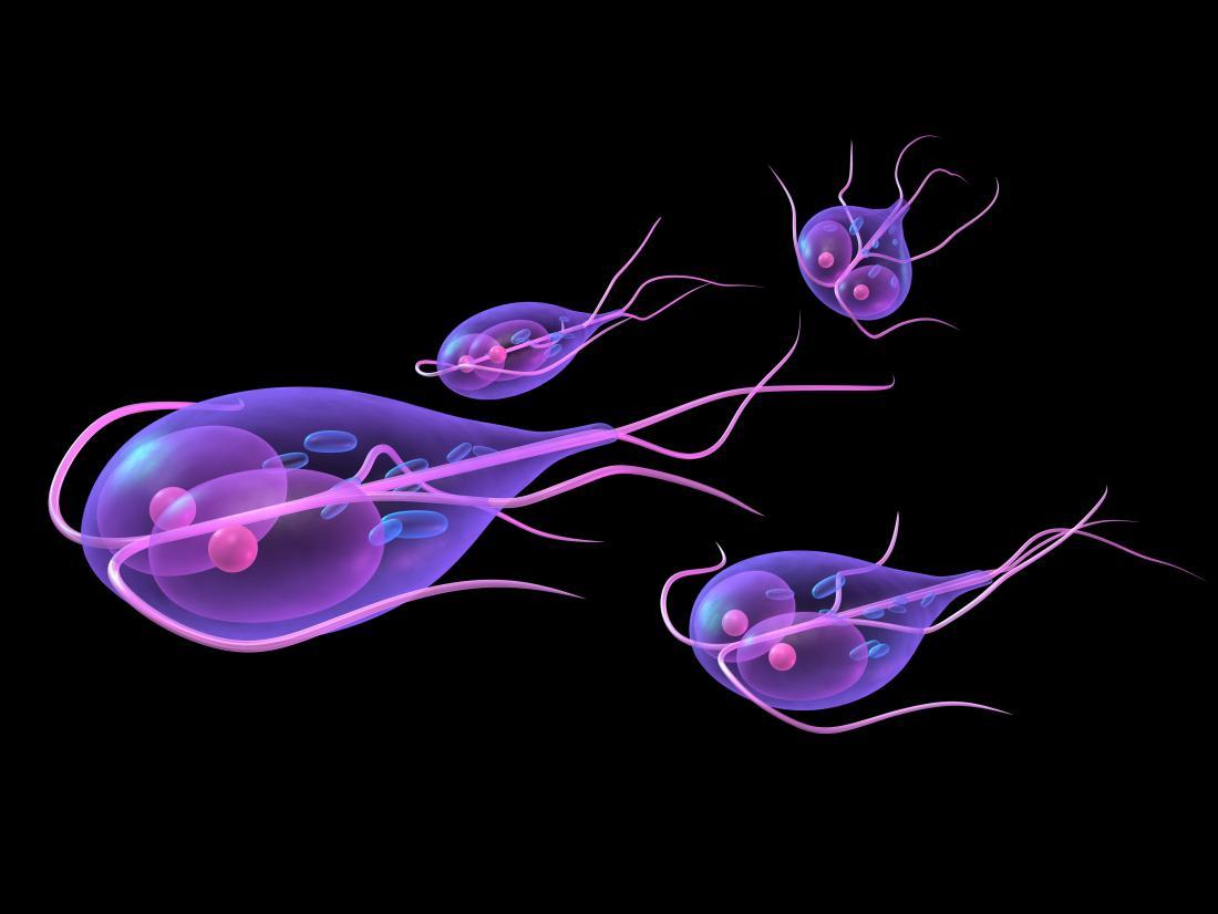 giardia uk tratament infecția cu vierme umane
