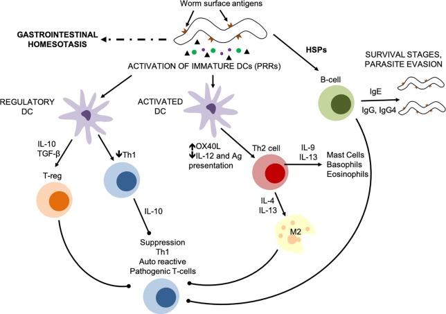 preparate complexe de la viermi la adulți positivo papiloma virus