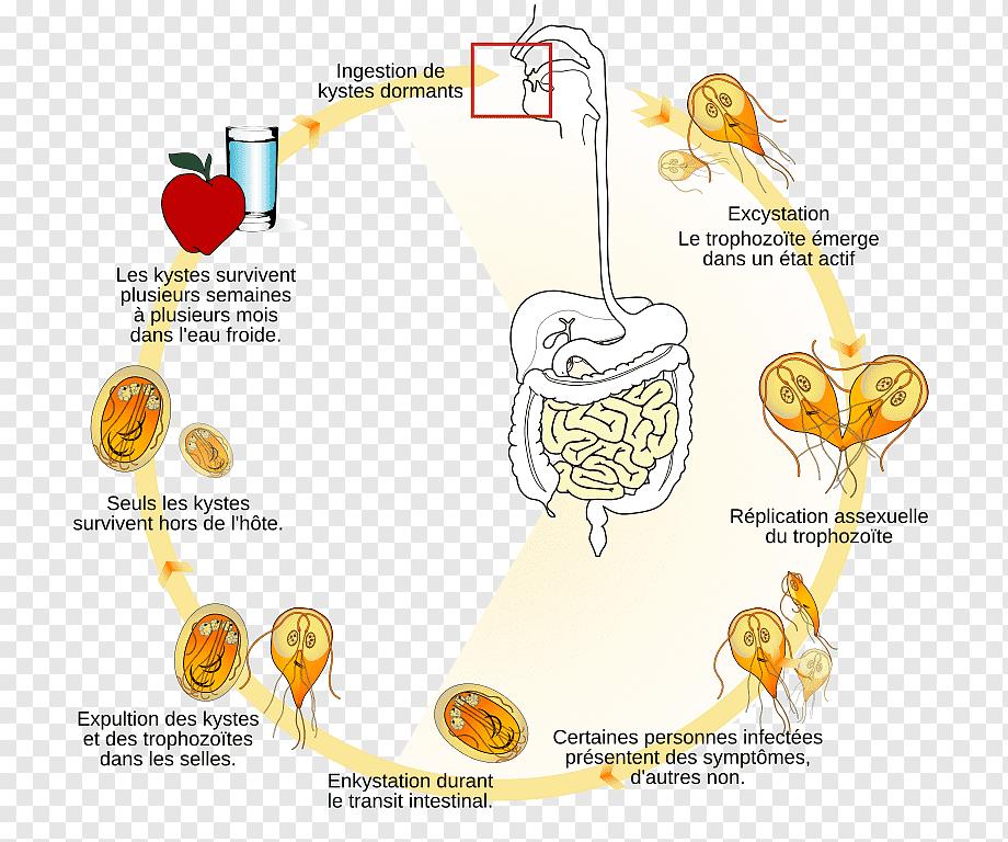 peritoneal cancer brca2 ce este condilomul la bărbați