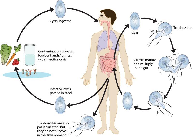 dysbiosis die off symptoms hpv therapy fiyat
