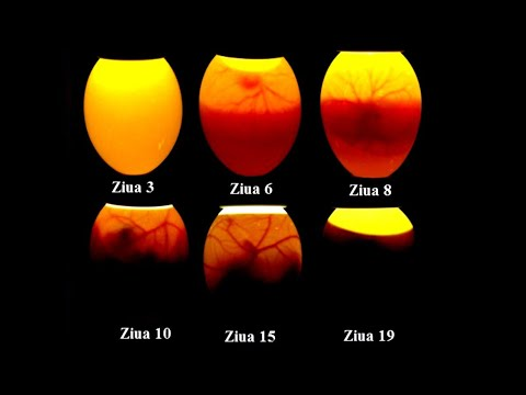 paraziti u organizmu kod dece herpes hpv related