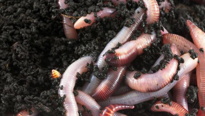 Scapă de o infestare cu vierme