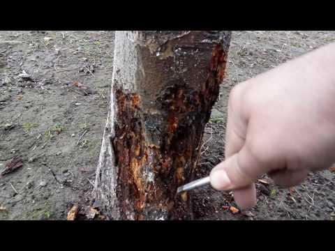 metoda de la viermi gaura de vierme pentru iepuri