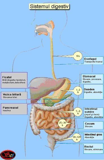 Detoxifierea ficatului și a vezicii biliare - Doza de Sănătate