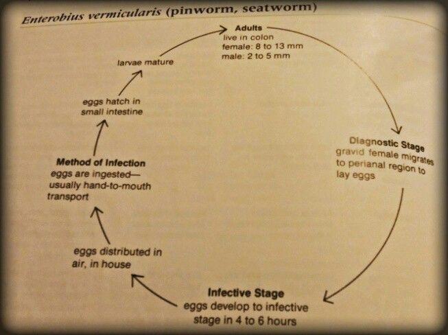 Cum se numesc pinworms