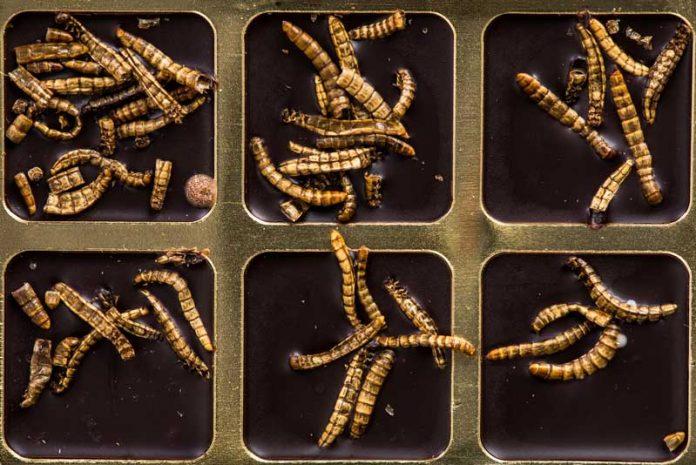 paraziti corpului uman acțiunea medicamentelor antihelmintice