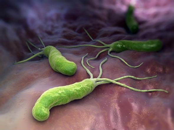 bacterii in scaun tipuri de macroparaziți