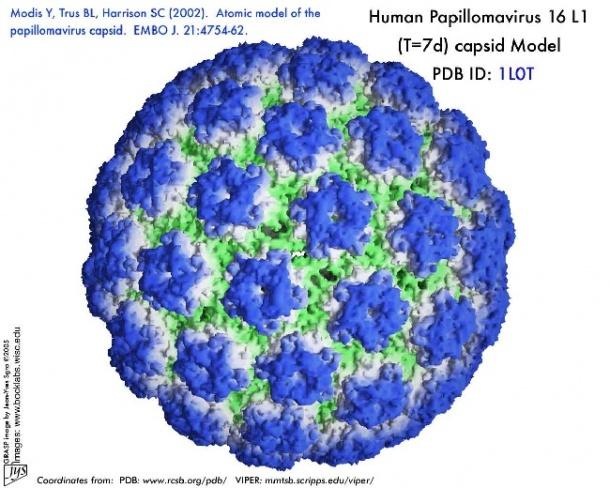 can hpv virus cause bladder infections peste infestat cu paraziti
