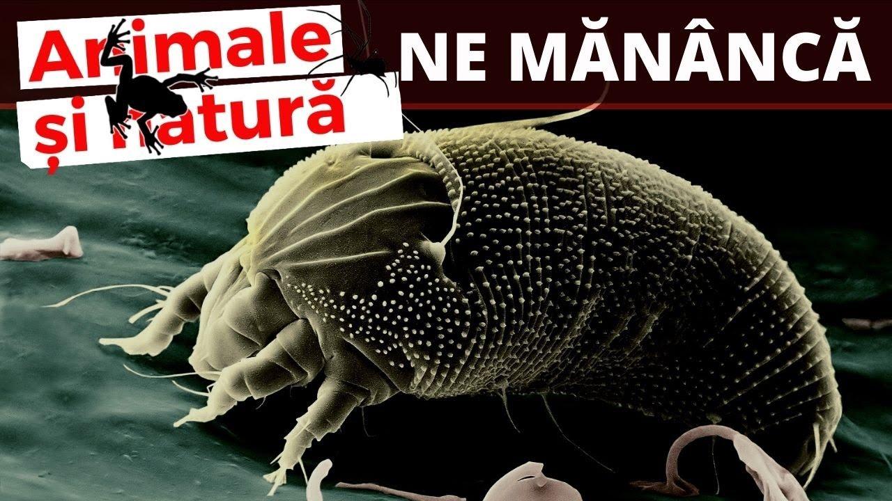 leacuri moderne pentru viermii umani viermi paraziti si bolile produse de acestia