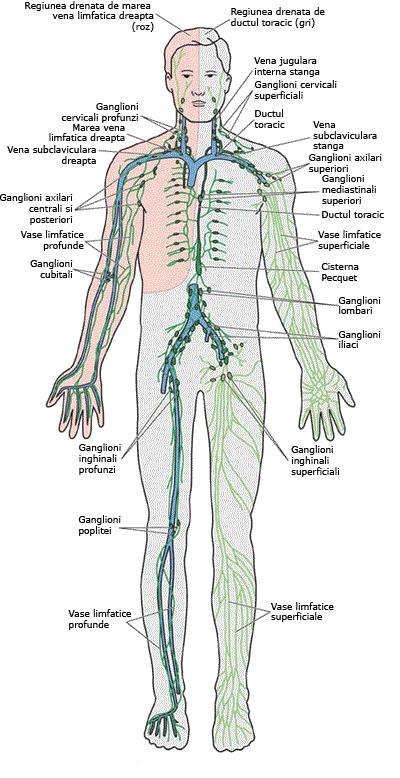 detoxifierea limfei