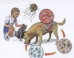 cum se vindecă viermii în pediatrie