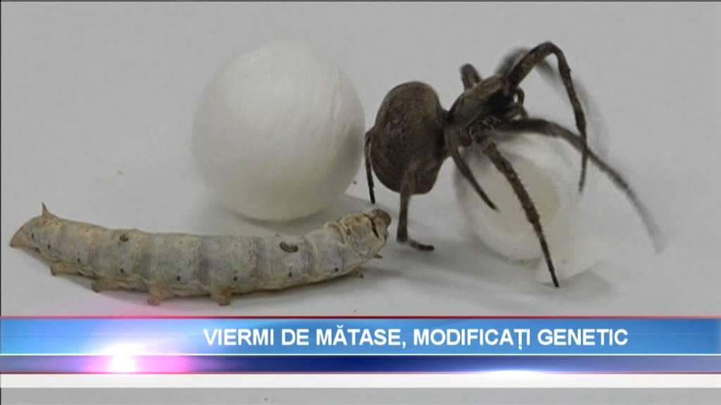 Medicament pentru viermi încrucișați Medicament eficient pentru prevenirea viermilor