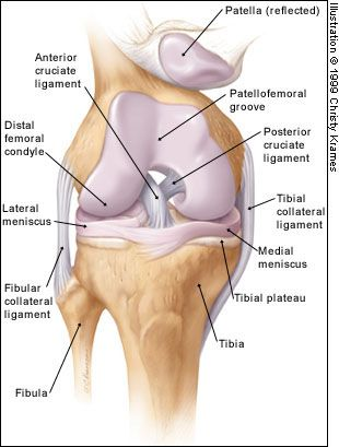 dureri abdominale giardioase)