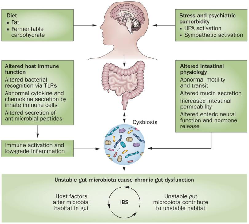 dysbiosis gastritis