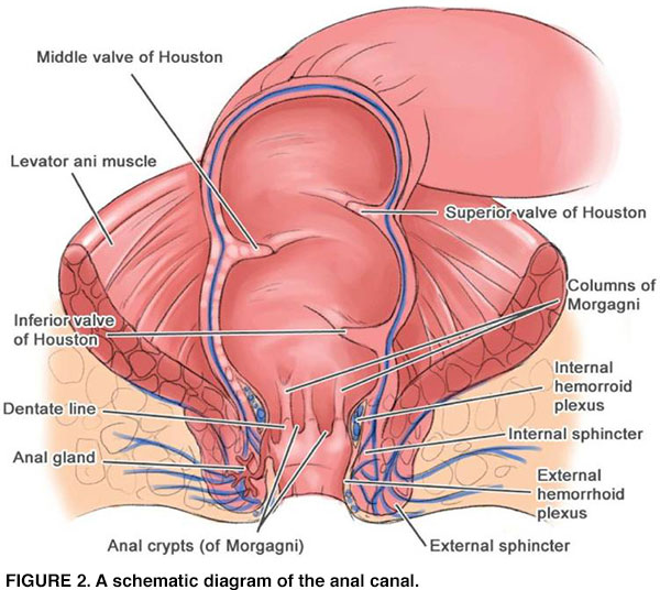 Does hpv cause colorectal cancer, Does hpv cause colorectal cancer