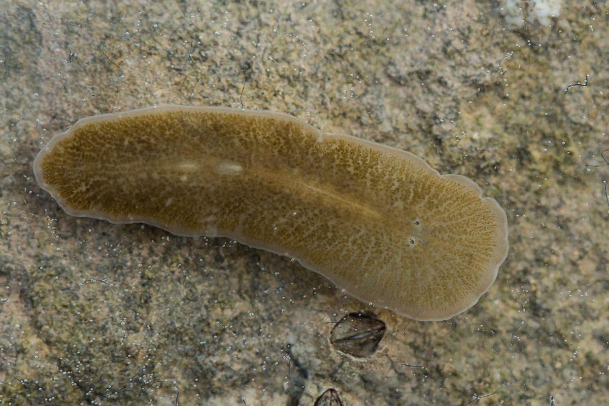 pastile pentru tratamentul viermilor pinworm la copii simptome ale prezenței parazitare
