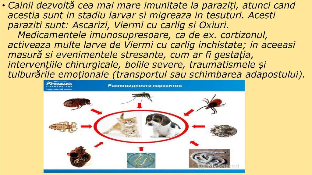 parazitii unde ai fost ce ai facut negi genitale pe pubis